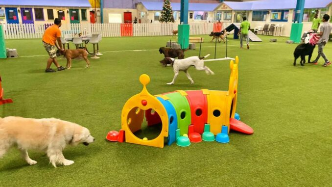 FRIENDLY PLACES YOU CAN FIND IN DUBAI FOR YOUR DOG